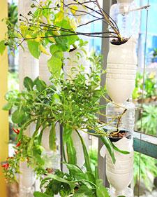 6032_102010_hydroponics_l